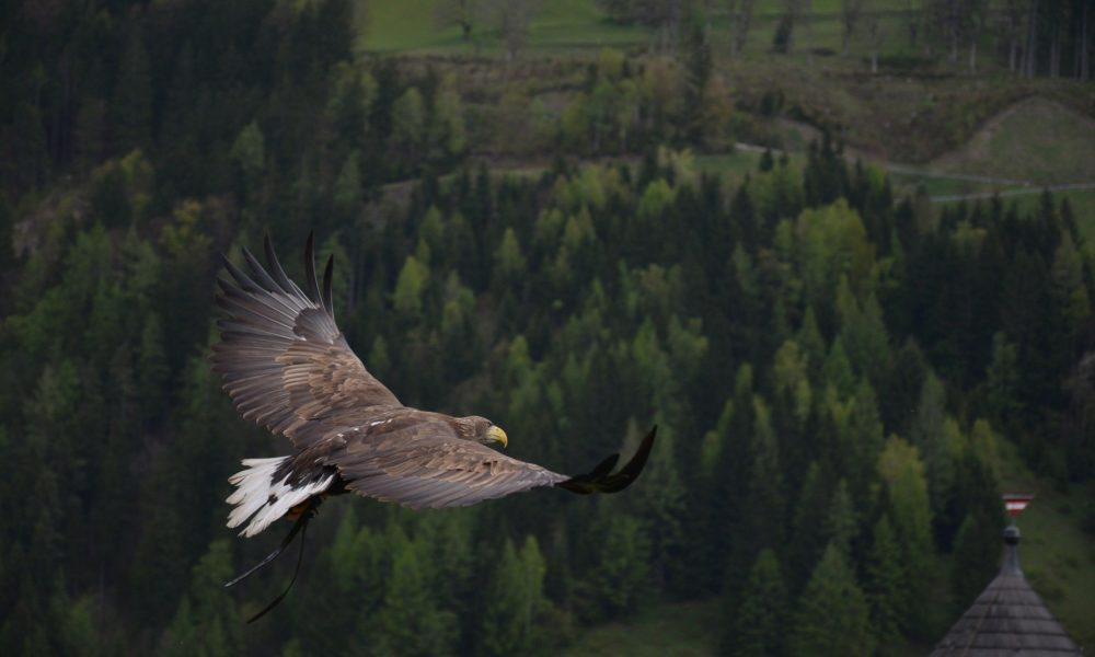 Libertà, uccello che vola